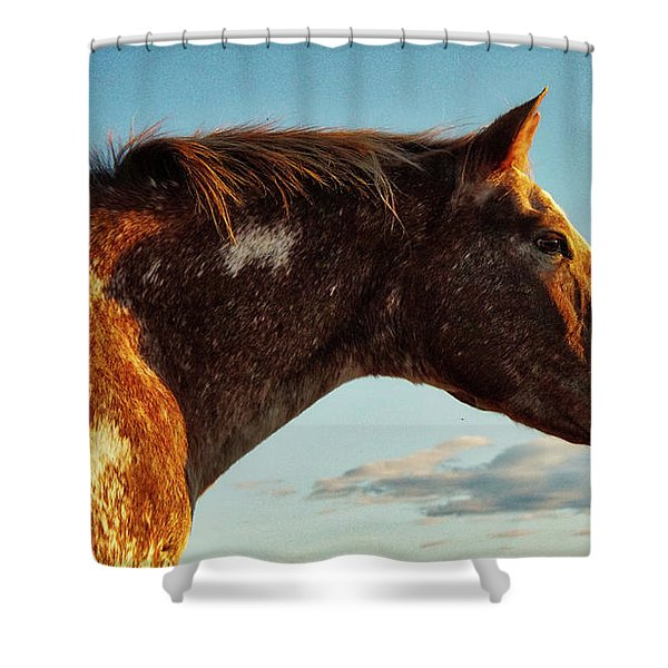 Appaloosa Mare Shower Curtain
