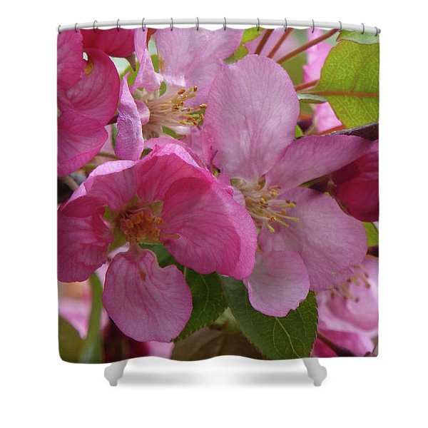 Shower Curtain featuring the photograph Apple Blossoms by Cris Fulton