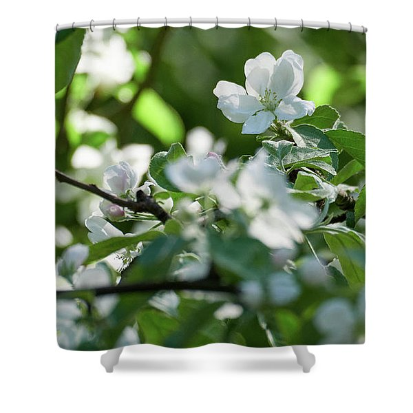 Apple Flowers 1 Shower Curtain