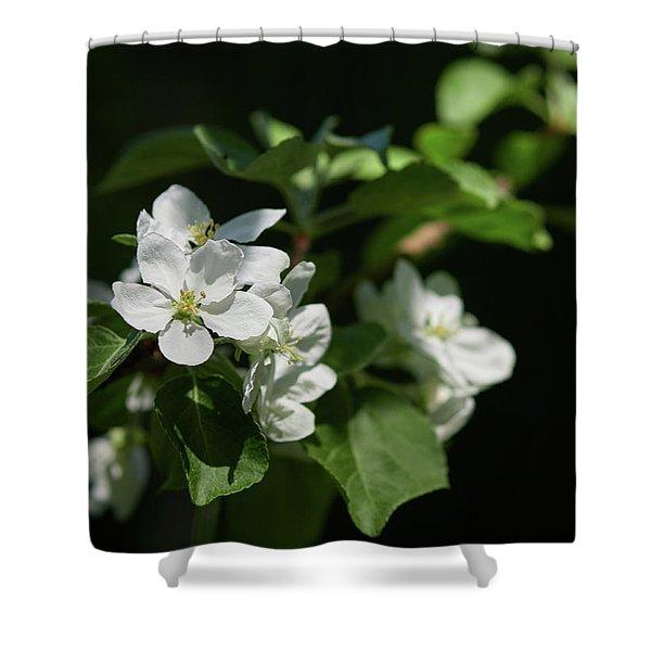 Apple Flowers 19 Shower Curtain