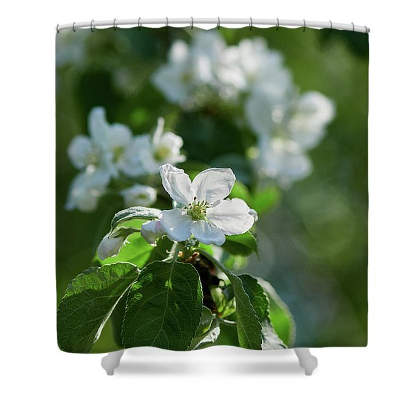 Apple Flowers 4 Shower Curtain