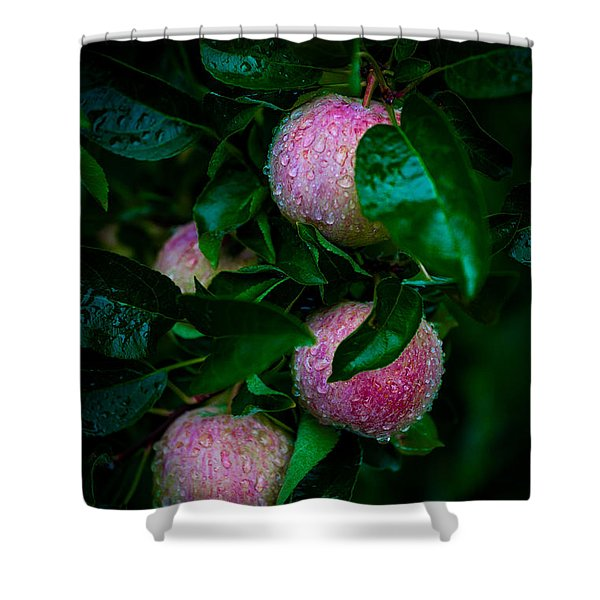 Apples After The Rain Shower Curtain