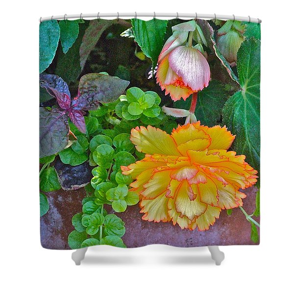 Apricot Begonia 3 Shower Curtain