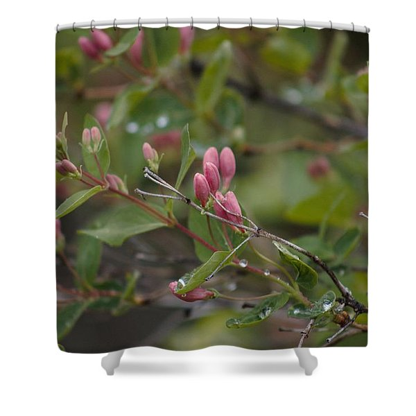 April Showers 2 Shower Curtain