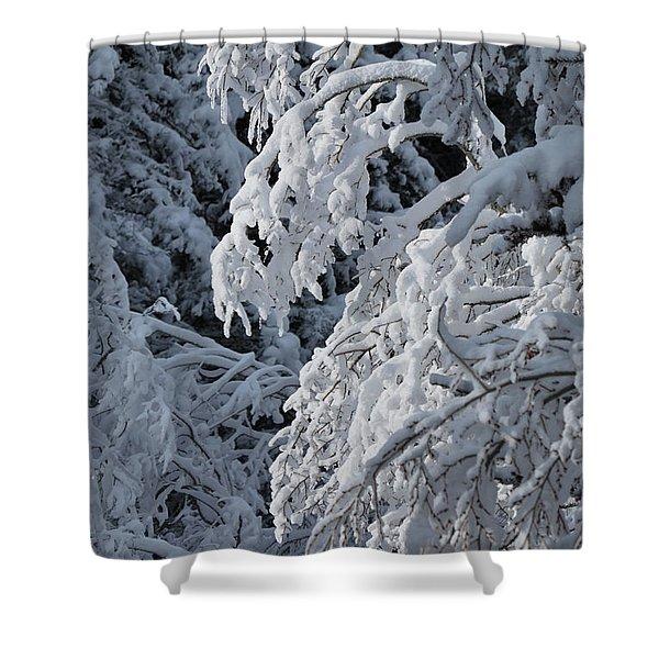 April Snow Shower Curtain