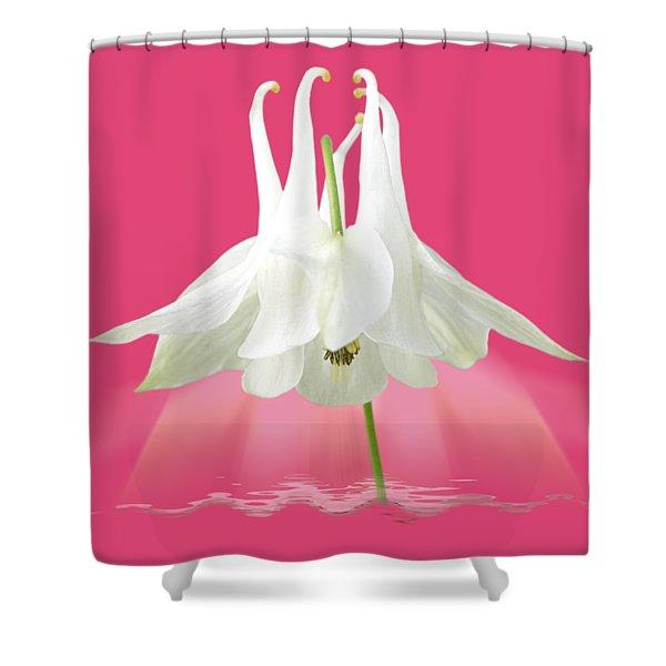 Aquilegia Spotlight On Hot Pink Shower Curtain