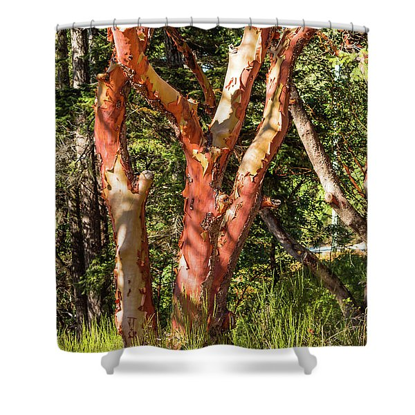 Arbutus Shower Curtain