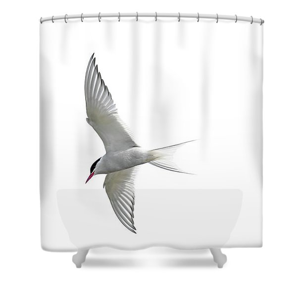Arctic Tern Flying In Mist Shower Curtain