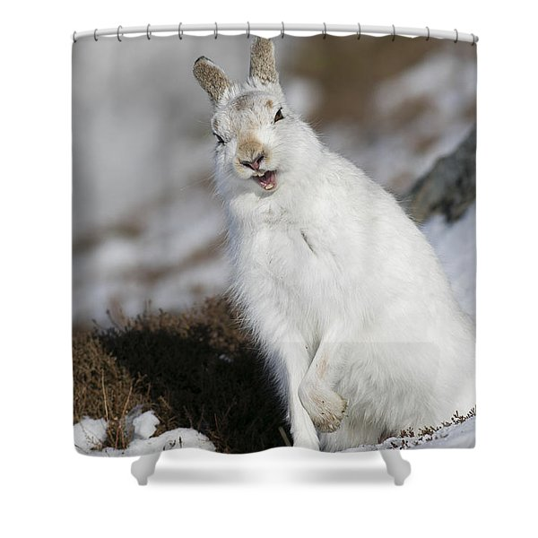 Are You Kidding? - Mountain Hare #14 Shower Curtain