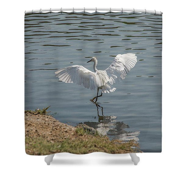 Are You Ready To Dance - Great Egret In Mtn View Ca Shower Curtain