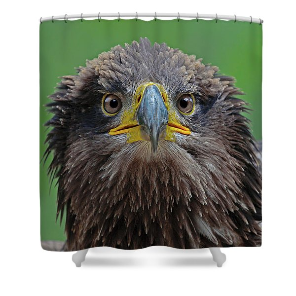 Arrow Of Time Shower Curtain