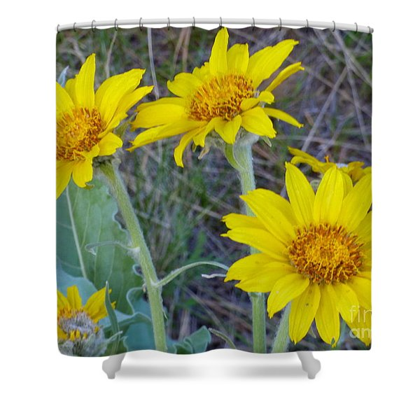 Shower Curtain featuring the photograph Arrowleaf Balsamroot Flower by Charles Robinson