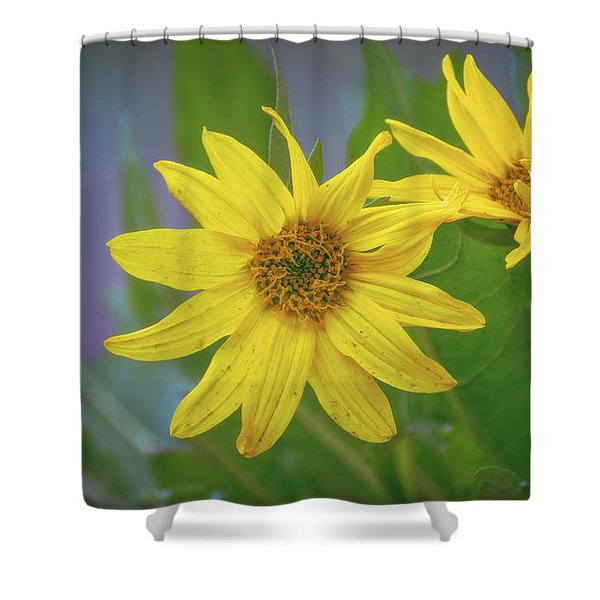 Shower Curtain featuring the photograph Arrowleaf Balsamroot by Jason Coward