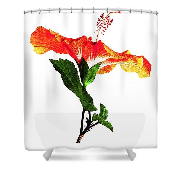 Art Orange Shower Curtain