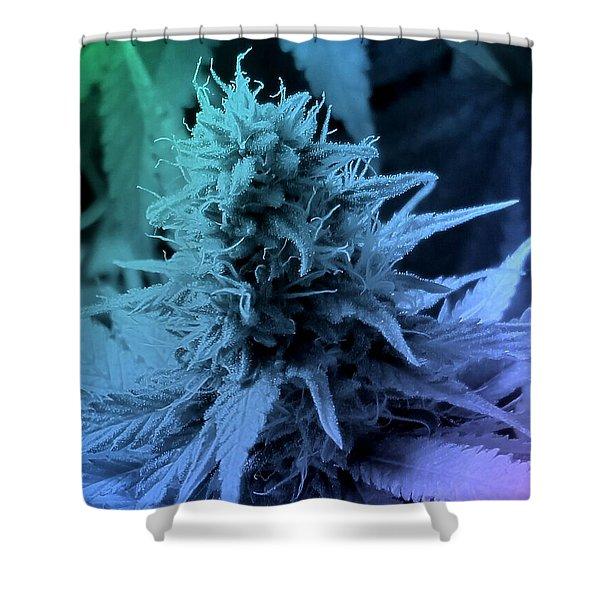 Artful Oasis Macro Abstract 112216.5 Shower Curtain