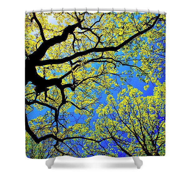 Artsy Tree Canopy Series, Early Spring - # 01 Shower Curtain