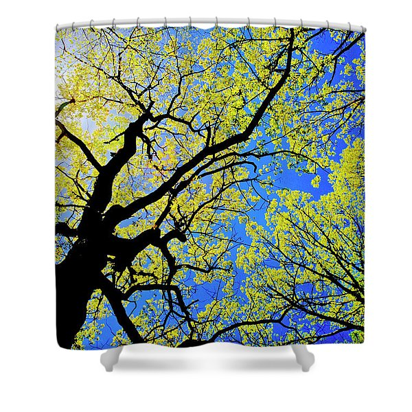Artsy Tree Canopy Series, Early Spring - # 02 Shower Curtain