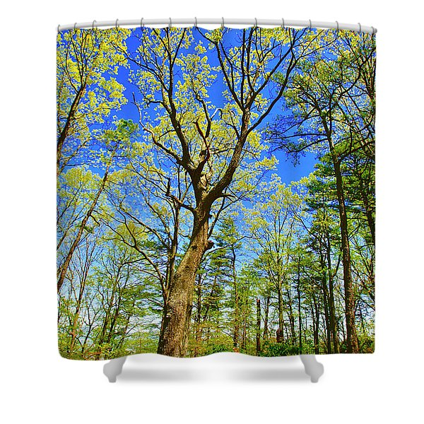 Artsy Tree Series, Early Spring - # 04 Shower Curtain