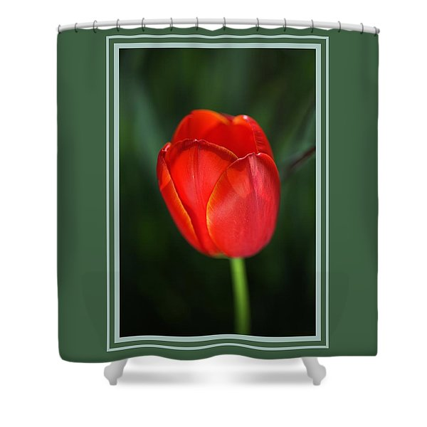 Tulip Red With A Hint Of Yellow Shower Curtain