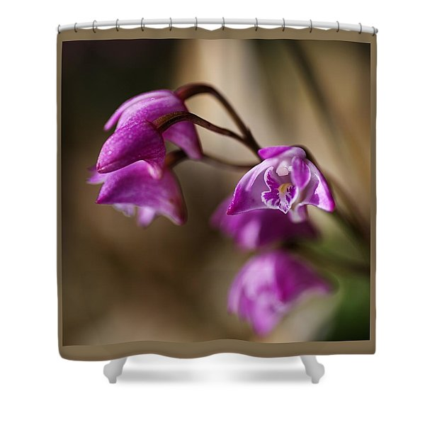 Australia's Native Orchid Small Dendrobium Shower Curtain