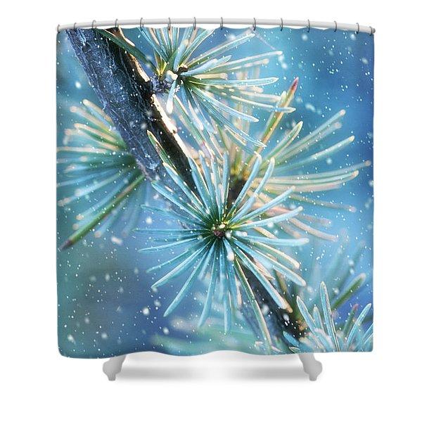 Blue Atlas Cedar Winter Holiday Card Shower Curtain