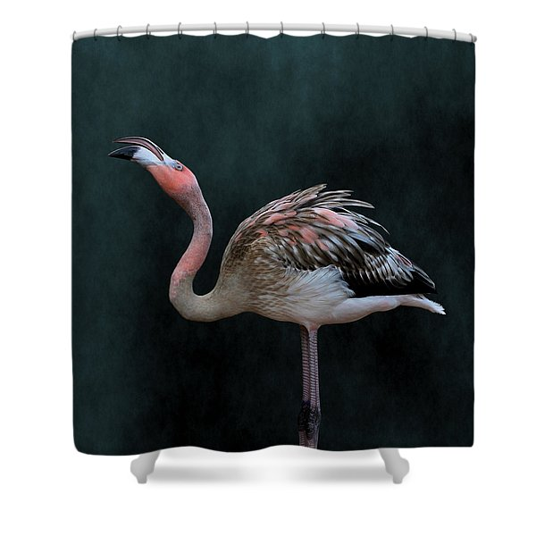 Song Of The Flamingo Shower Curtain