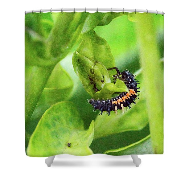 Asian Lady Beetle Larva Feeding On Aphids Shower Curtain