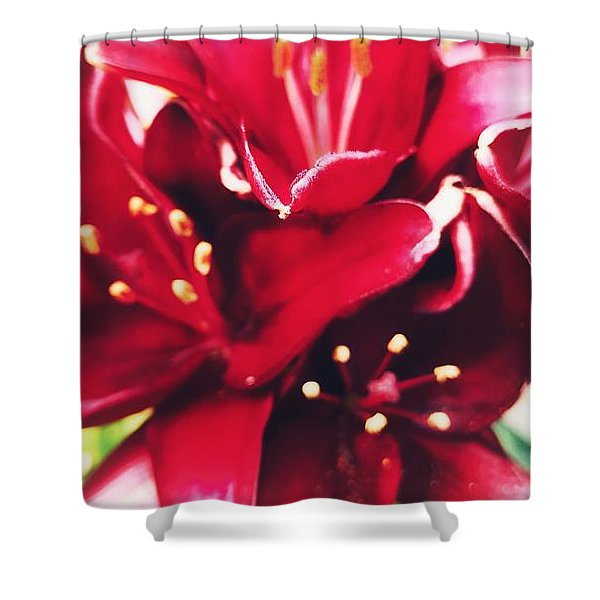 Asiatic Lilies Shower Curtain