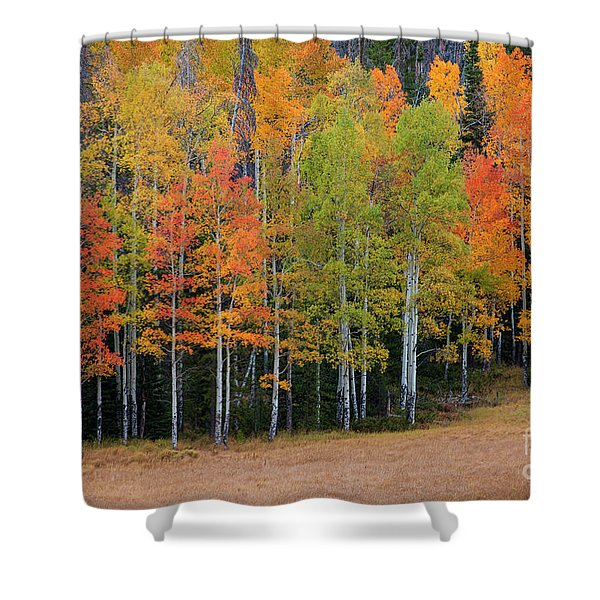 Aspen Color Shower Curtain