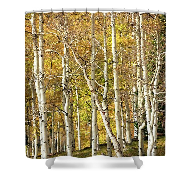 Aspen Forest Shower Curtain