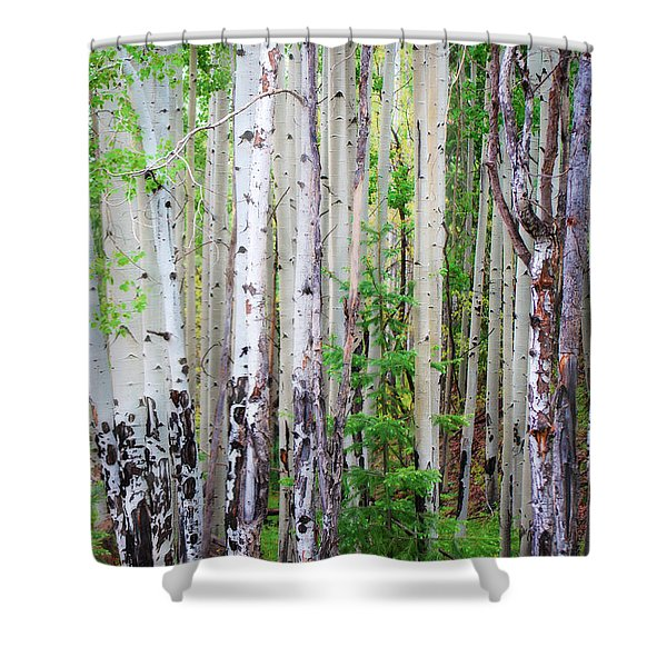 Aspen Grove In The White Mountains Shower Curtain