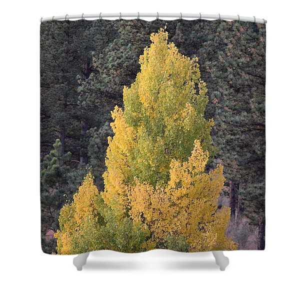 Aspen Tree Fall Colors Co Shower Curtain