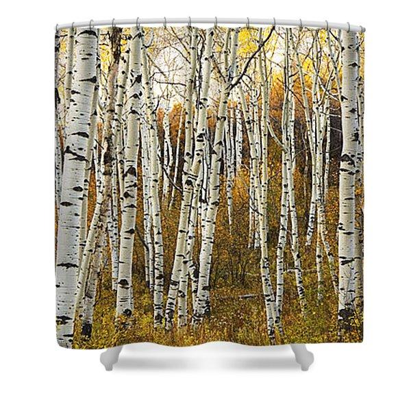 Aspen Tree Grove Shower Curtain