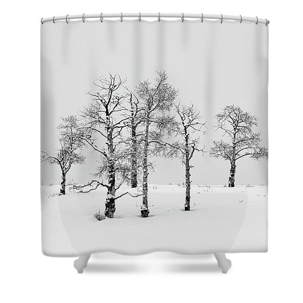 Aspen Tree Line-up Shower Curtain