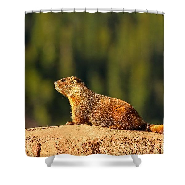 Aspen Yellow Bellied Marmot Shower Curtain