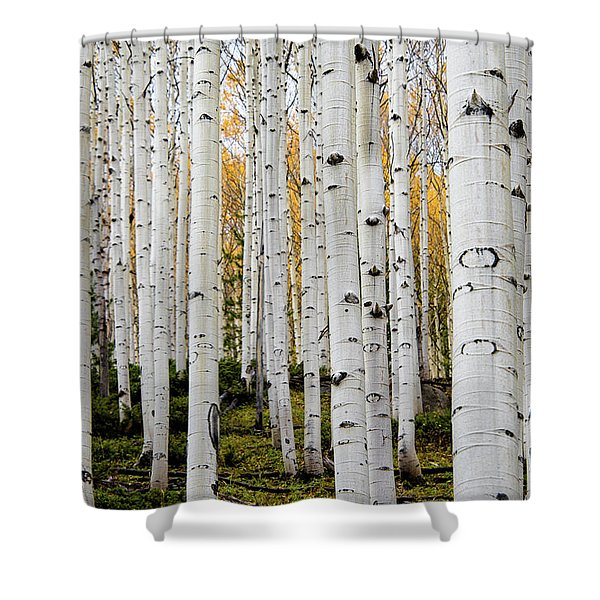 Aspens And Gold Shower Curtain