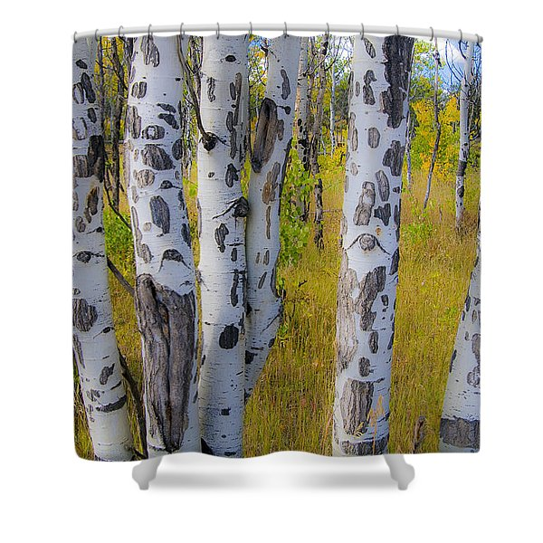 Aspens Shower Curtain