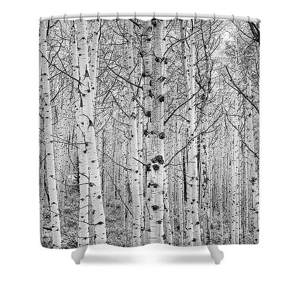 Shower Curtain featuring the photograph Aspens In High Key by John De Bord