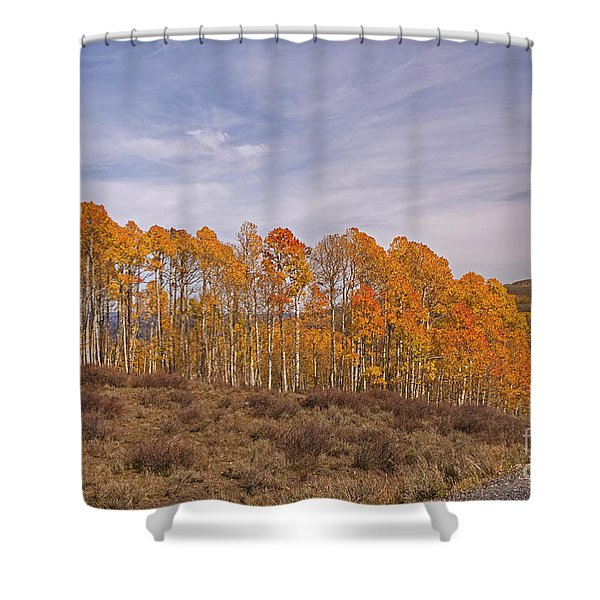 Aspens In Utah Shower Curtain