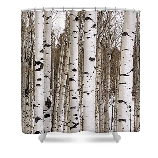 Aspens In Winter Panorama - Colorado Shower Curtain