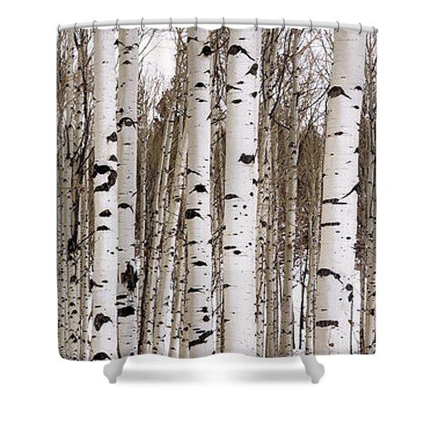 Aspens In Winter Panorama - Colorado Shower Curtain