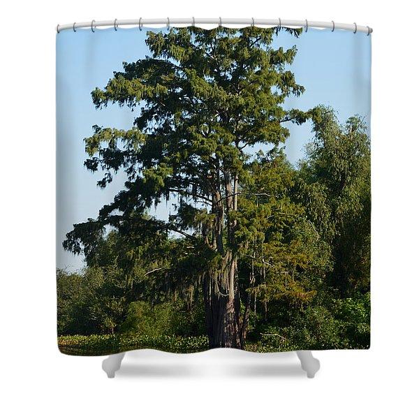 Atchafalaya Basin 11 Shower Curtain