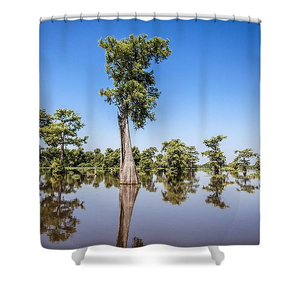 Atchafalaya Cypress Tree Shower Curtain