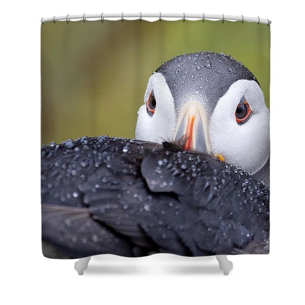 Atlantic Puffin With Rain Drops Shower Curtain