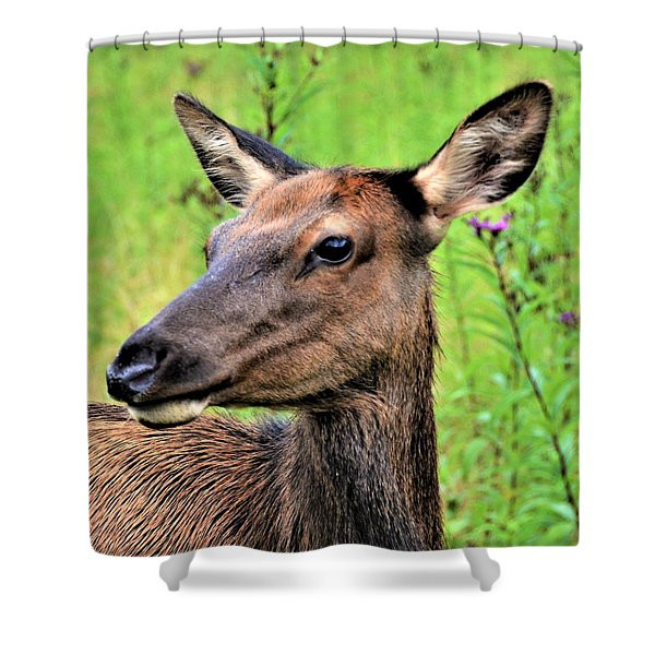 Attentive Yearling Shower Curtain
