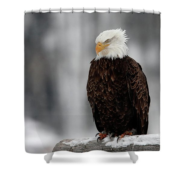 Shower Curtain featuring the photograph Attitude by Ronnie and Frances Howard