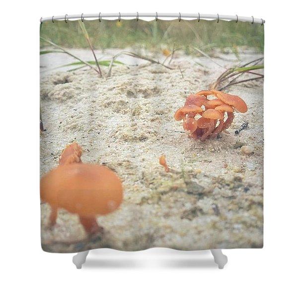 Auf Pilzjagd.  #pilze #sandboden Shower Curtain