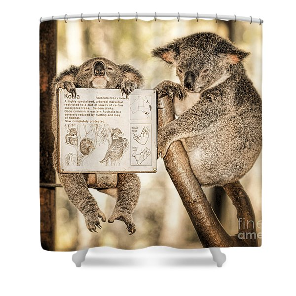 Shower Curtain featuring the photograph Koala Australia  by Juergen Held