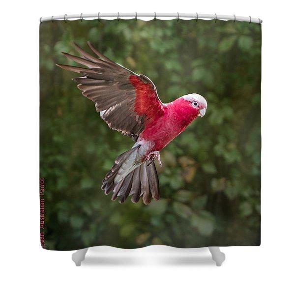 Australian Galah Parrot In Flight Shower Curtain