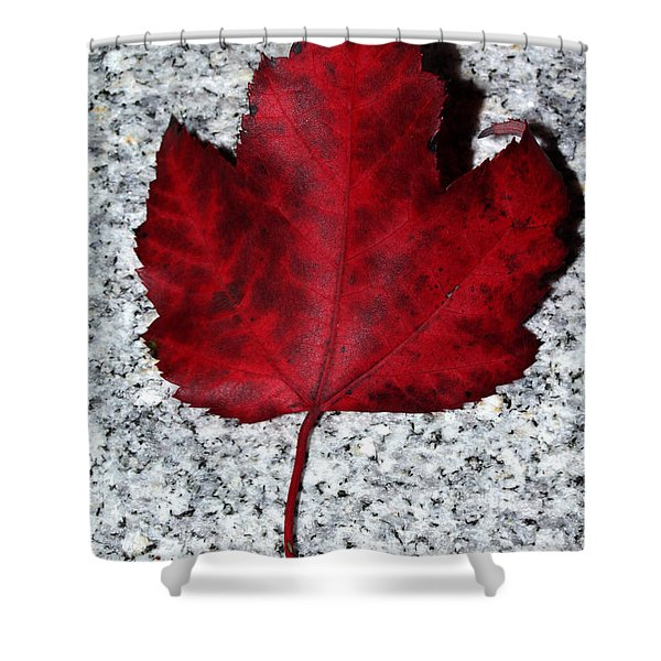 Autum Maple Leaf 1 Shower Curtain